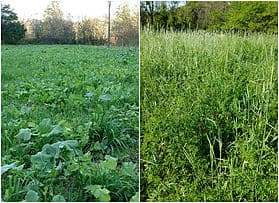 Podcast #25: Fall Food Plots and Does & Dont's of Early Season Hunting