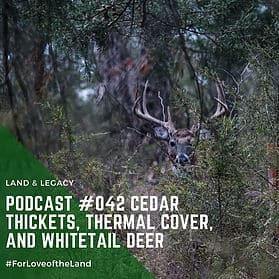 Podcast #42:  Cedar Thickets, Thermal Cover, and Whitetail Deer