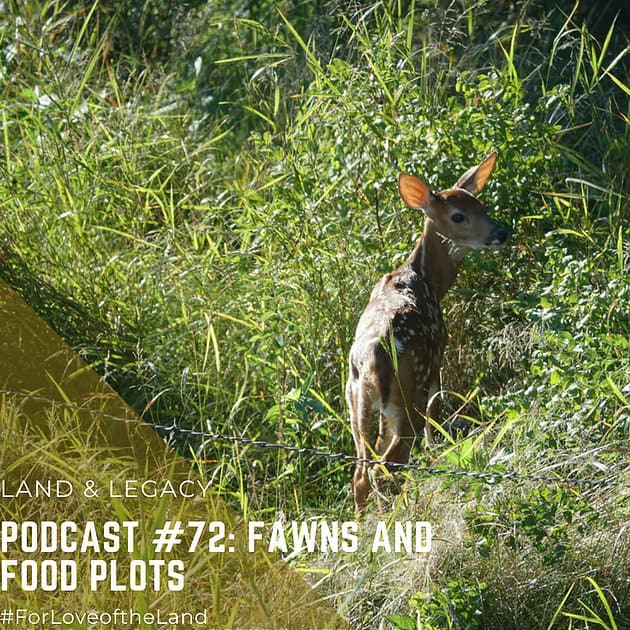 Podcast #72:  Fawns and Food Plots