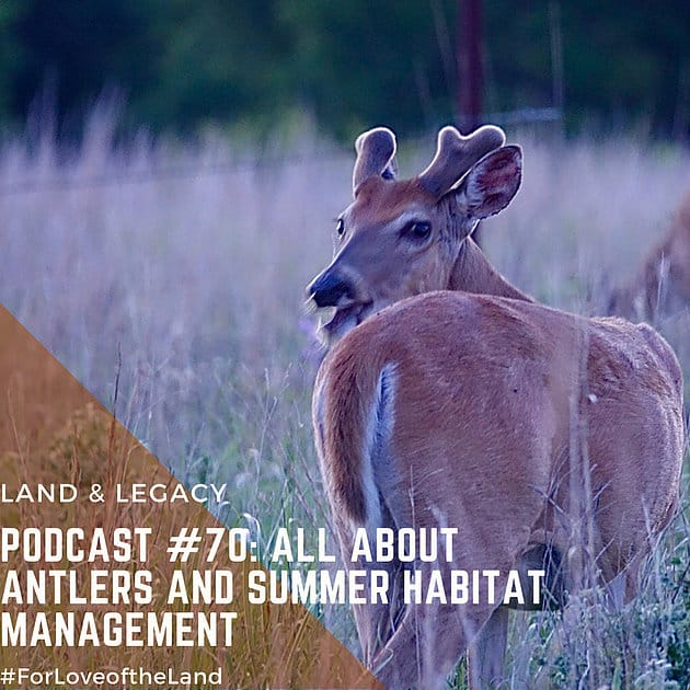 Podcast #70:  All About Antlers and Summer Habitat Management
