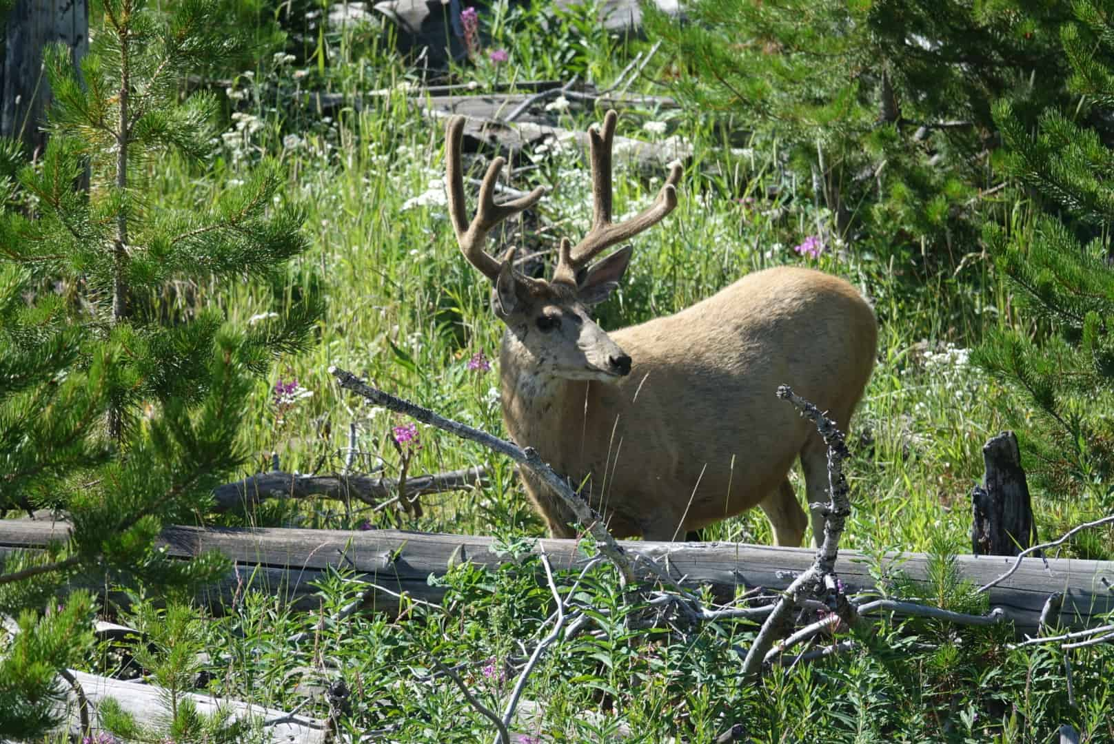 Podcast: Spot and Stalk Mule Deer Hunt Preparations