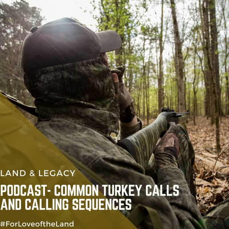 Podcast: Common Turkey Calls and Calling Sequences