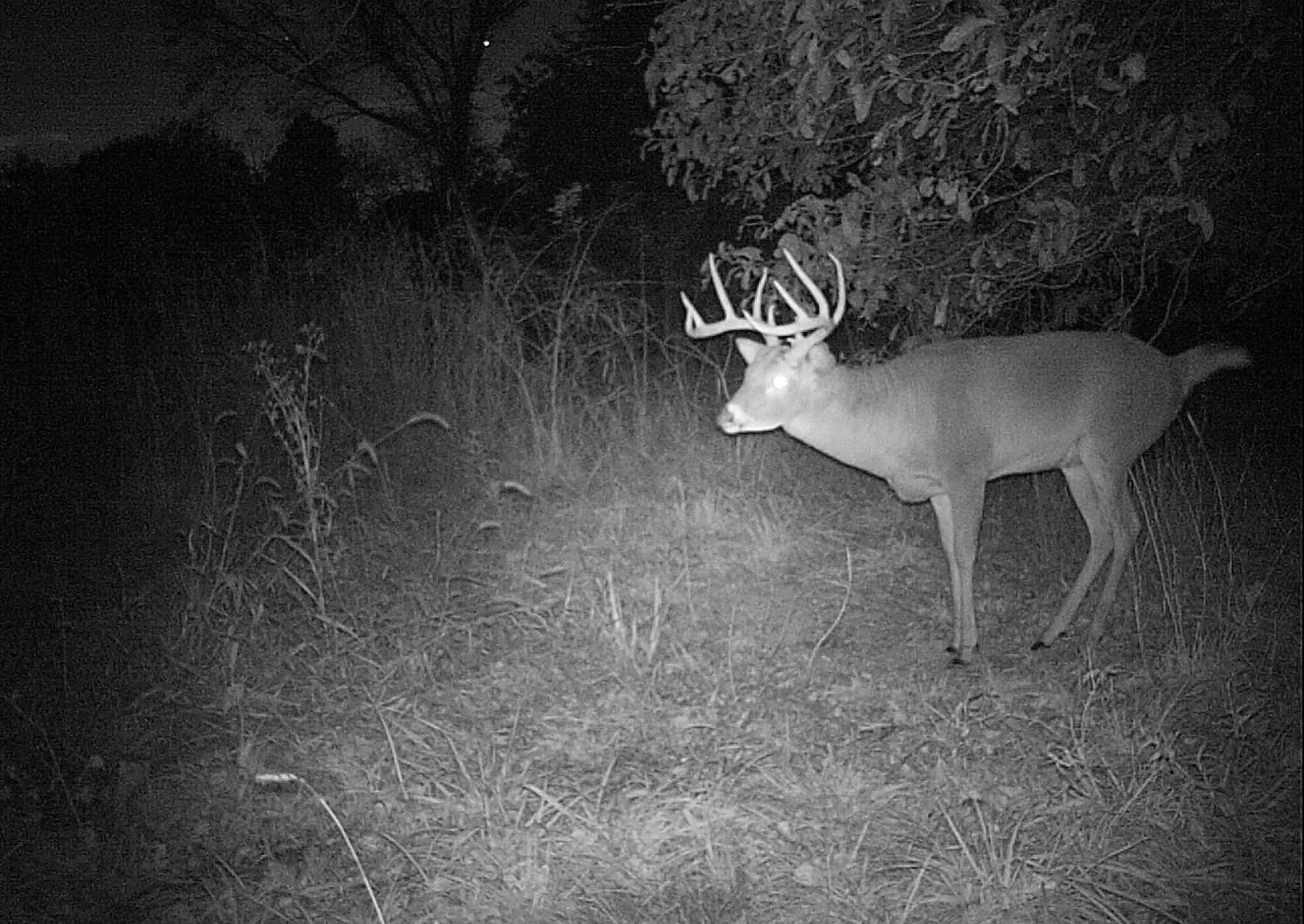 Podcast: Whitetail Scrapes 101