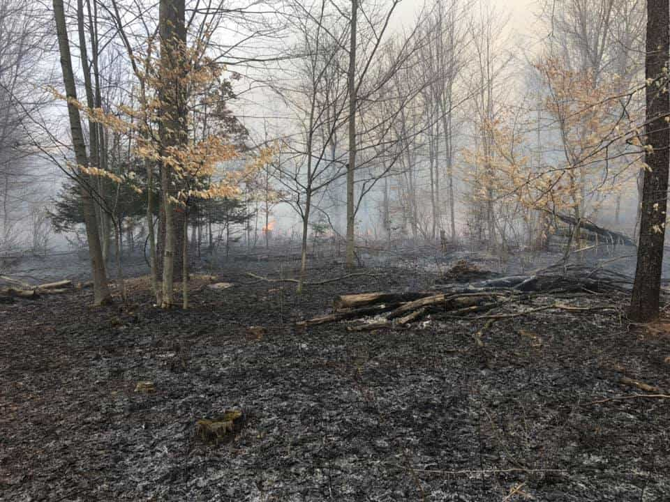 Habitat Heros #109: Prescribed Fire vs. Forestry Mulching