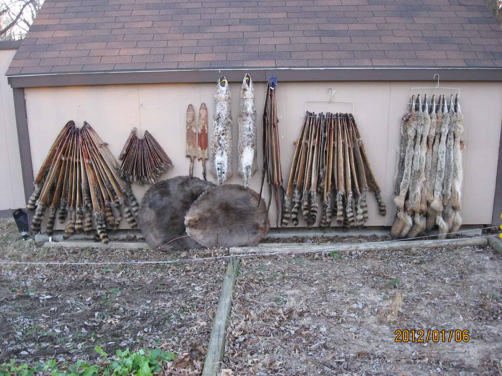 Should Trapping Be Part of Your Property Management?