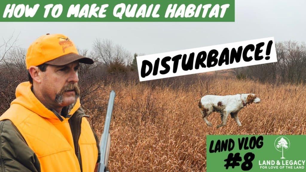 Creating bobwhite quail habitat