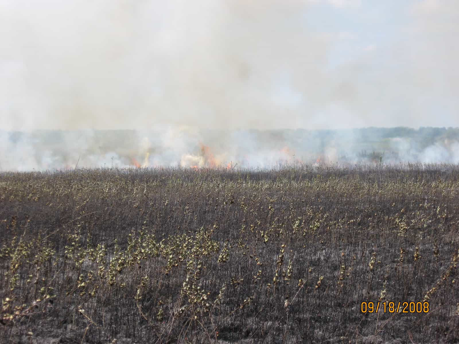 Late Summer/Early Fall Prescribed Burning