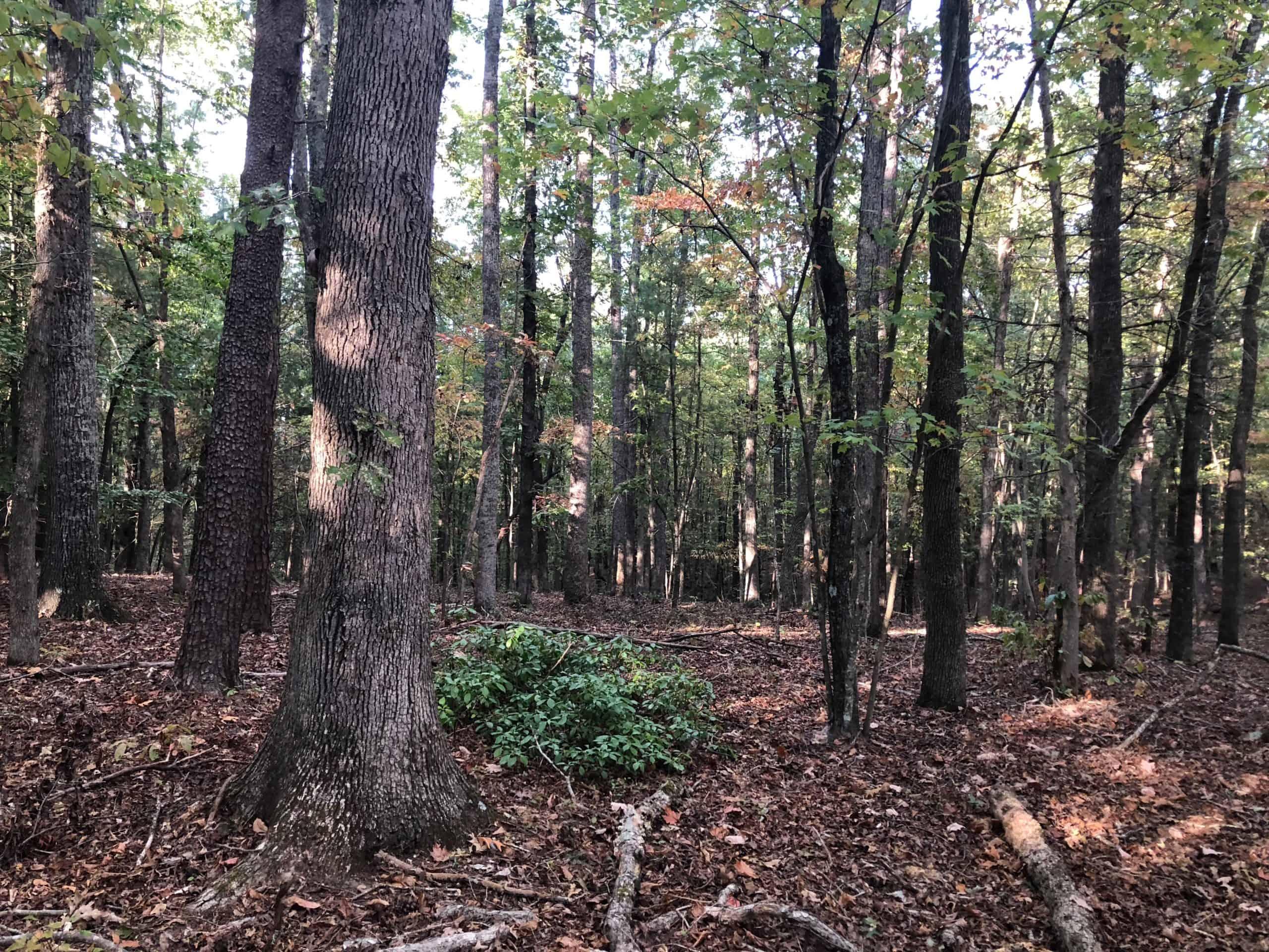 Critical Habitat Observations