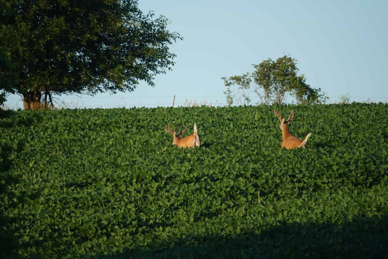 Fall Food Plot Guide with Stratton Seed
