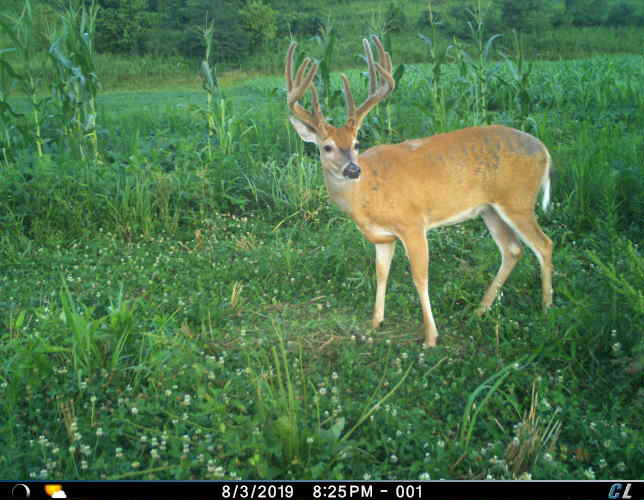 The Recipe for Producing Top Caliber Deer ANYWHERE