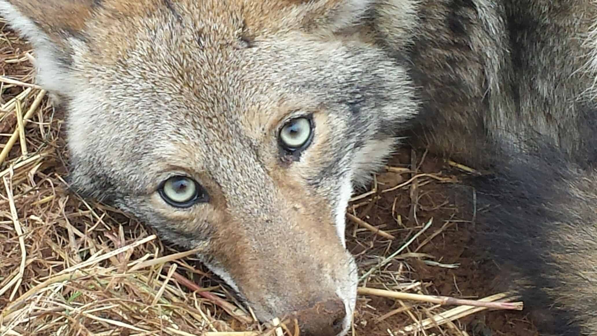 The Truths of Trapping Predators