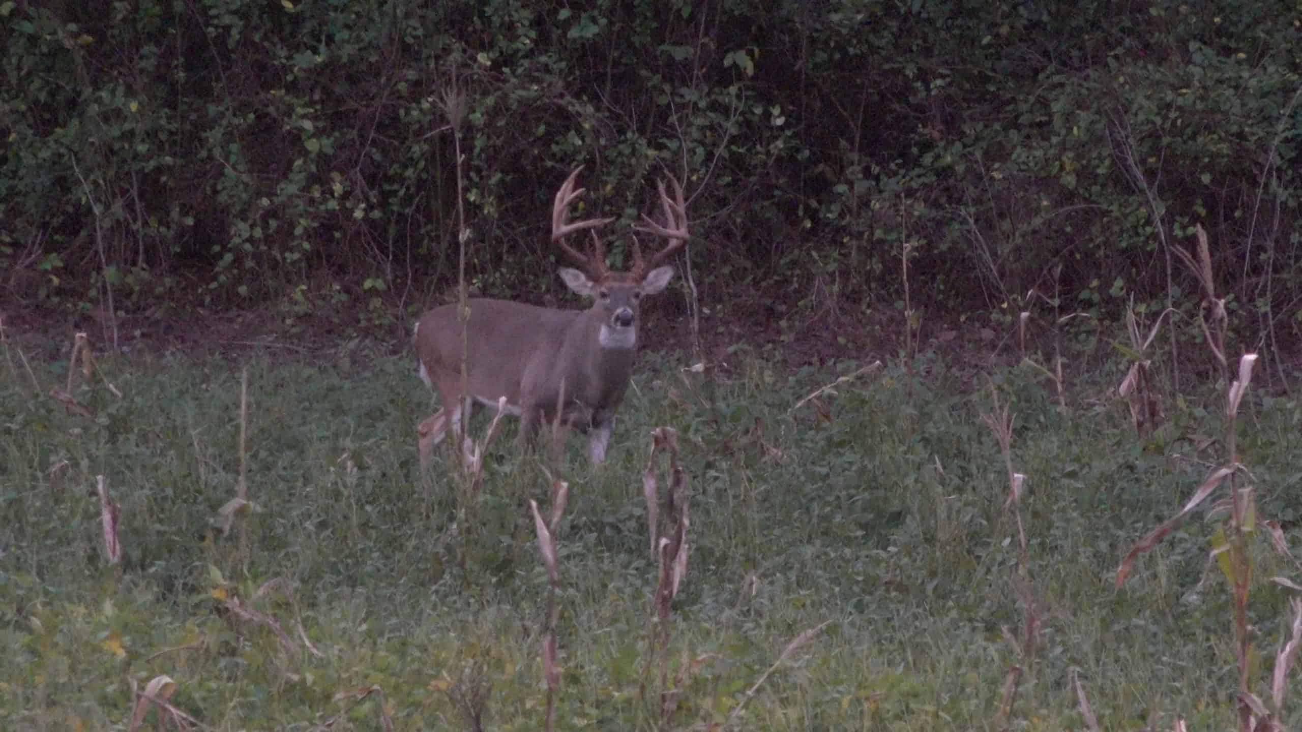 Habitat Changes and the Effects on Hunting
