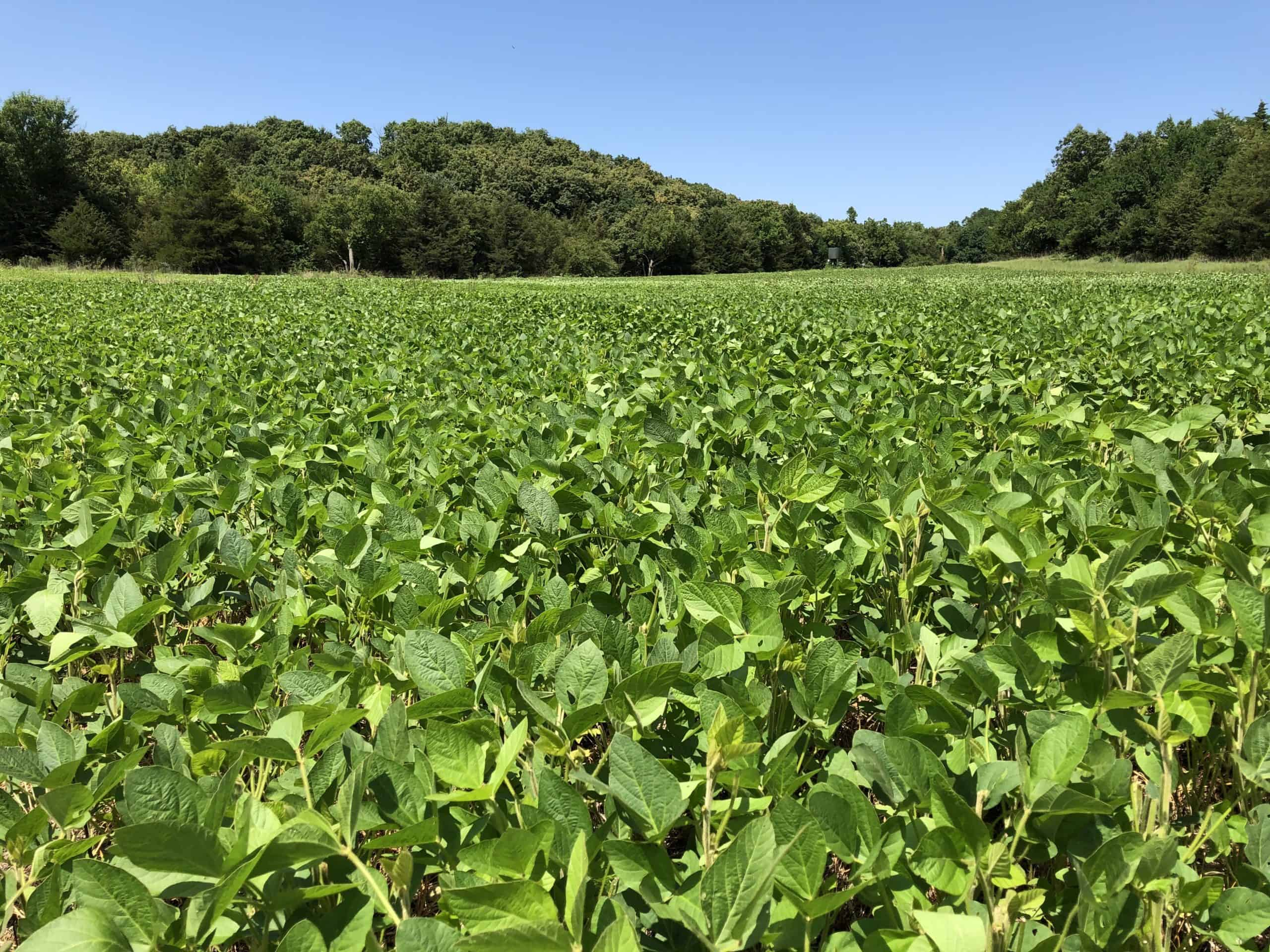 Soybeans are Tools, Not Food Plots