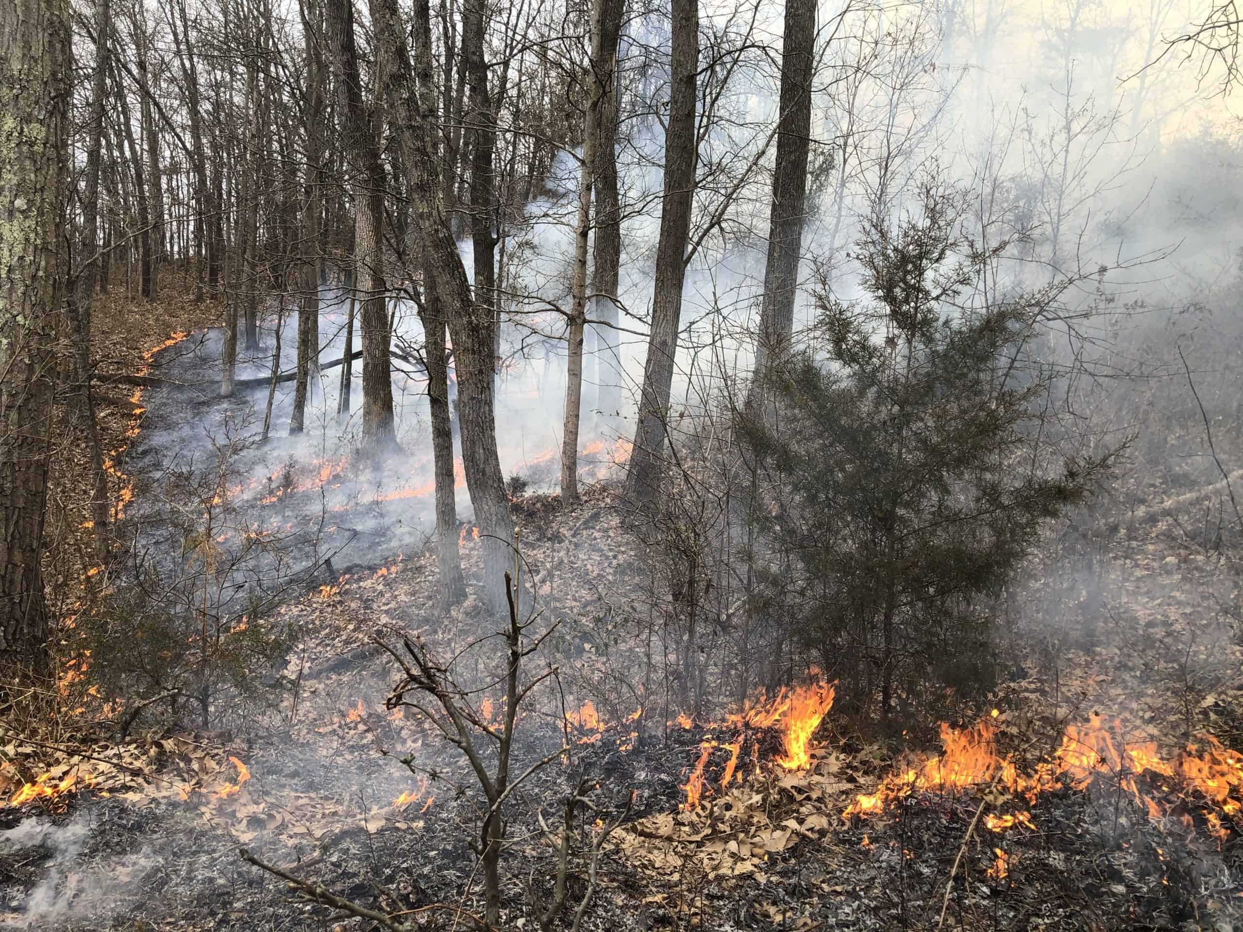Prescribed Fire to Restore Landscapes and Ecosystems