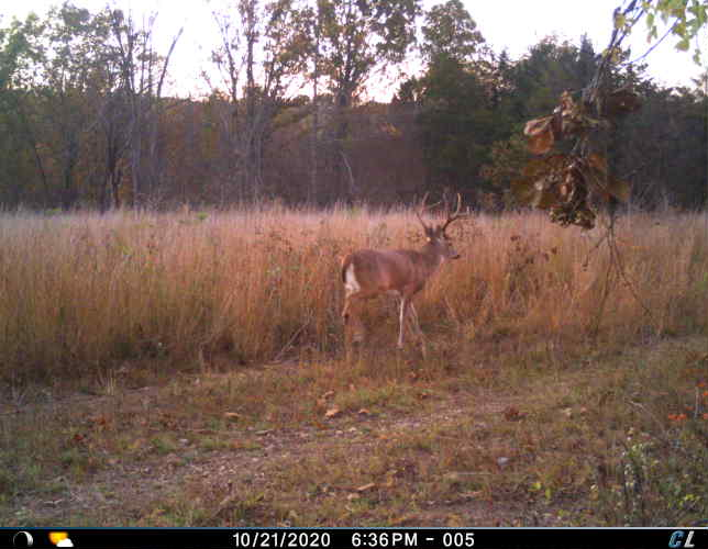 Step by Step Pre-Rut Hunting Guide