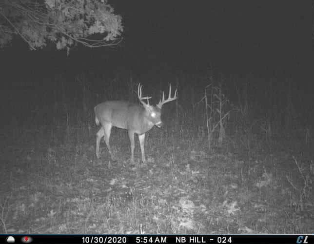 Your Trail Cameras Have Been Lying